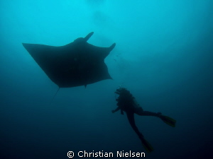 My wife and a friendly manta in silhouette. The Boiler, S... by Christian Nielsen 
